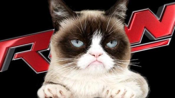 wwe_raw_grumpy_cat